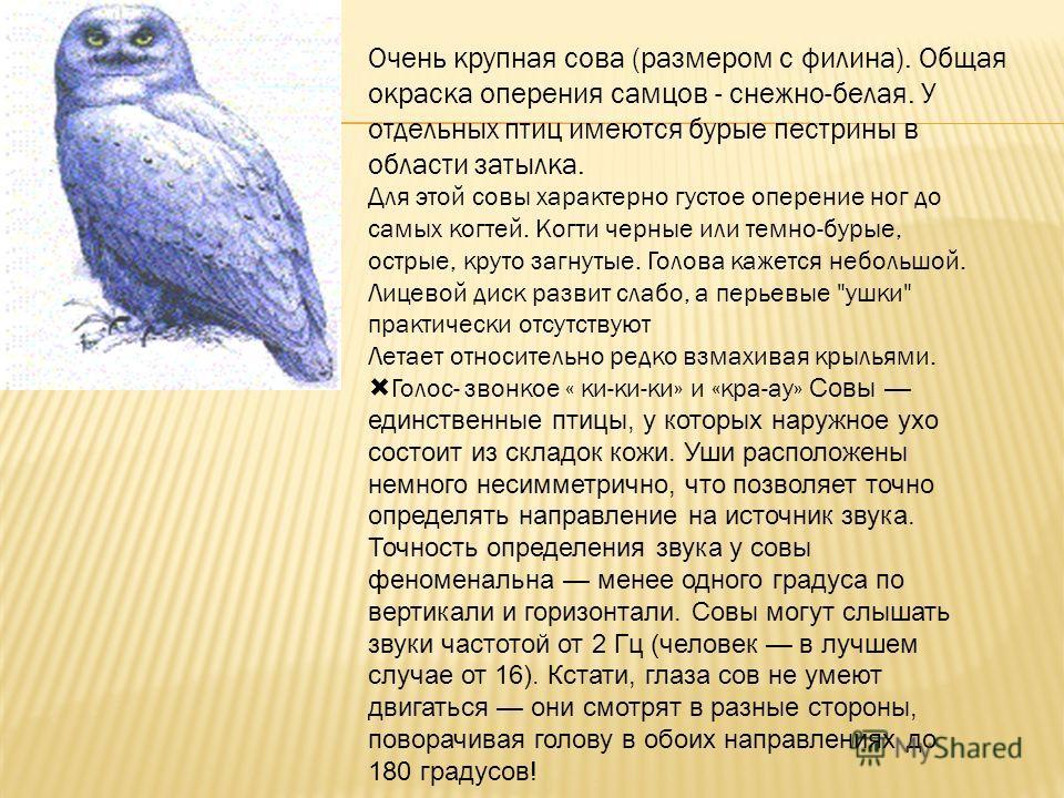 Очень крупная сова (размером с филина). Общая окраска оперения самцов - снежно-белая. У отдельных птиц имеются бурые пестрины в области затылка. Для этой совы характерно густое оперение ног до самых когтей. Когти черные или темно-бурые, острые, круто
