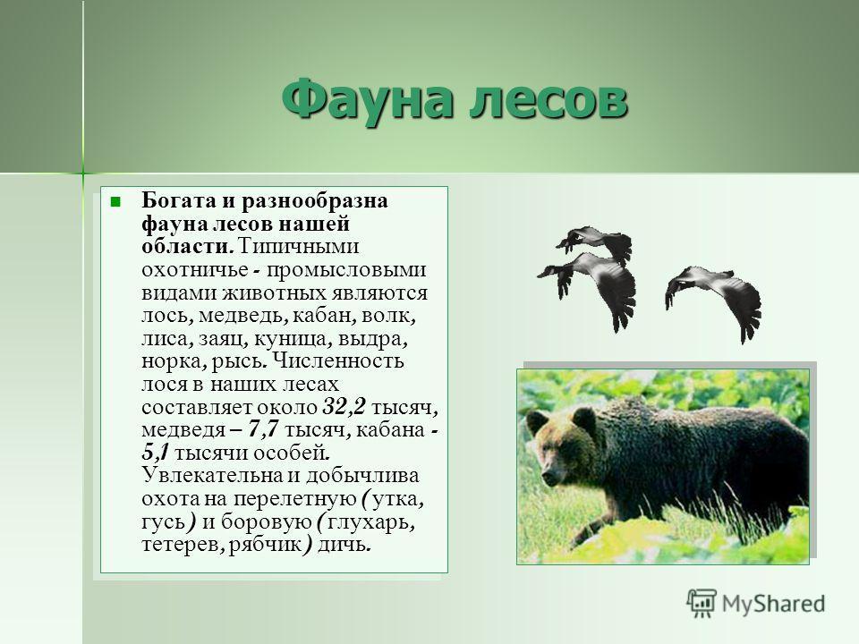 Вологодчина – лесной край Вологодчина - лесной край. Леса занимают 69 % её территории ( около 10 млн. га ) и составляют её главное богатство. Наибольшую ценность в составе лесов представляют хвойные породы - ель и сосна. Общий запас древесины на терр
