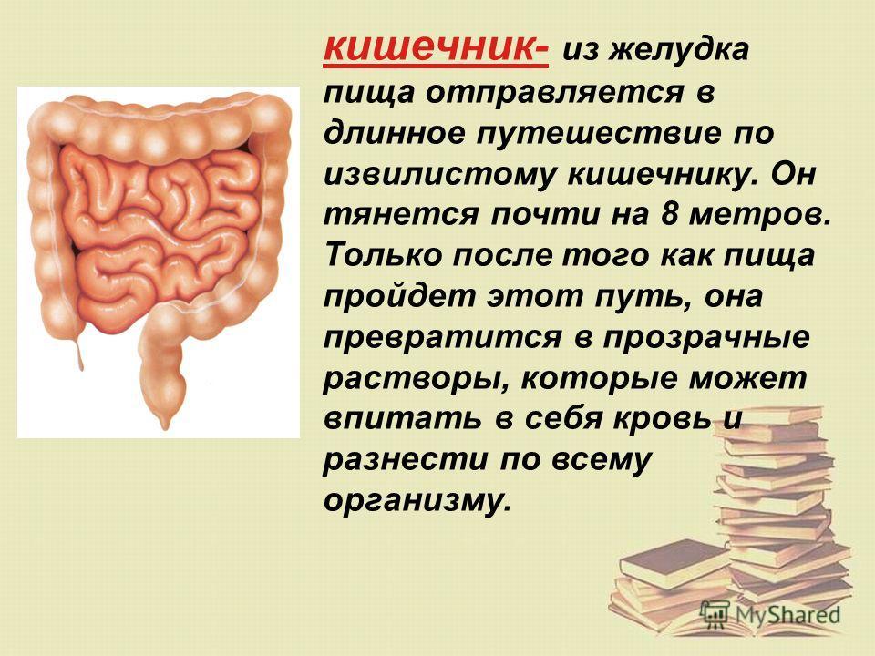 желудок- главное отделение «внутренней кухни». Желудок находится в верхней части живота (под рёбрами) с левой стороны. Когда в него попадает пища, он растягивается. Чем больше пищи мы съедаем, тем сильнее растягивается желудок. В желудке пища перераб