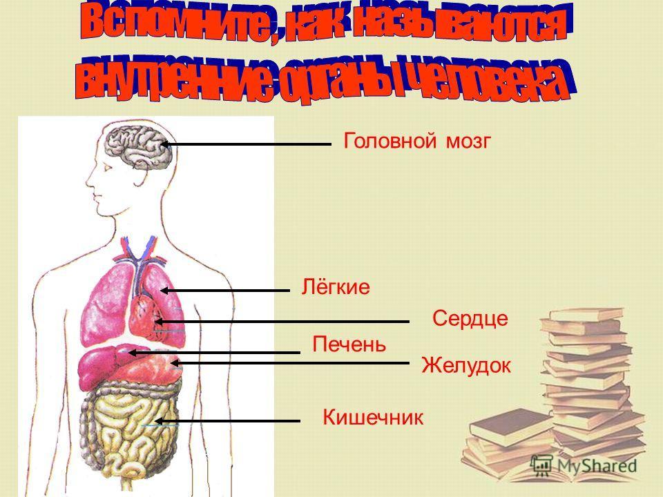 Из чего состоит наш организм? Организм – это самостоятельная страна Кровеносные сосуды - дороги МОЗГ - ПРАВИТЕЛЬСТВО Органы - города Клетки - жители