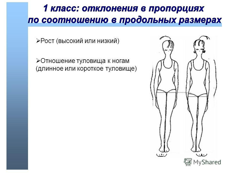 Отношение туловища к ногам (длинное или короткое туловище)