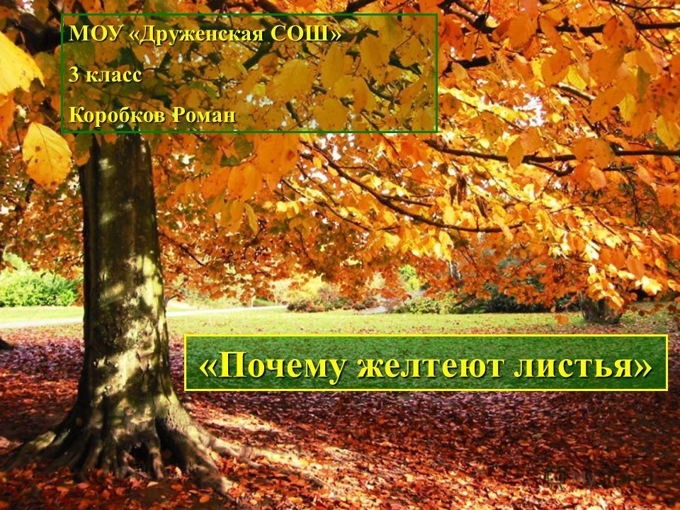 МОУ «Друженская СОШ» 3 класс Коробков Роман «Почему желтеют листья»
