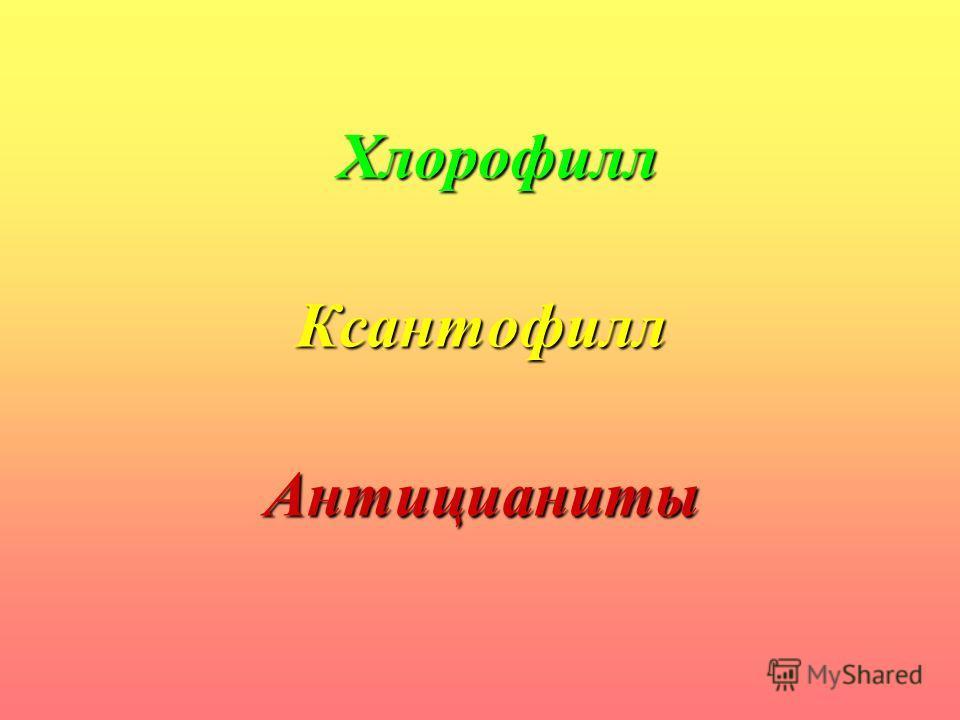 Хлорофилл КсантофиллАнтицианиты