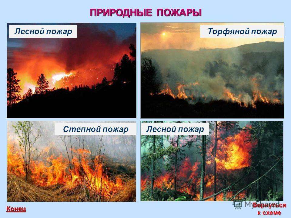 ПРИРОДНЫЕ ПОЖАРЫ Вернуться к схеме Вернуться к схеме Конец Лесной пожар Торфяной пожар Степной пожар Лесной пожар