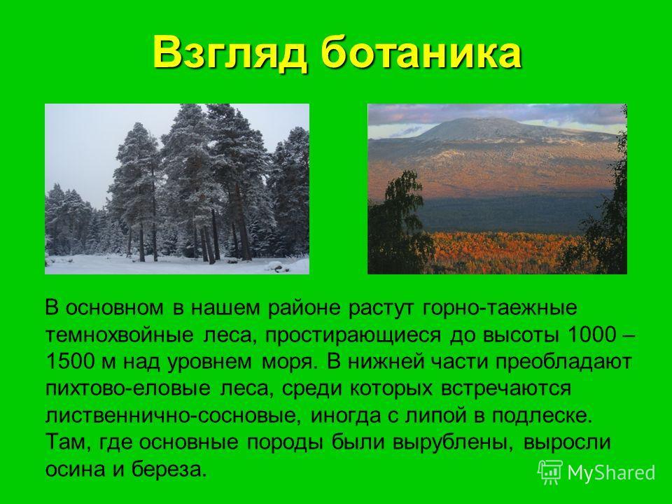 Взгляд ботаника В основном в нашем районе растут горно-таежные темнохвойные леса, простирающиеся до высоты 1000 – 1500 м над уровнем моря. В нижней части преобладают пихтово-еловые леса, среди которых встречаются лиственнично-сосновые, иногда с липой
