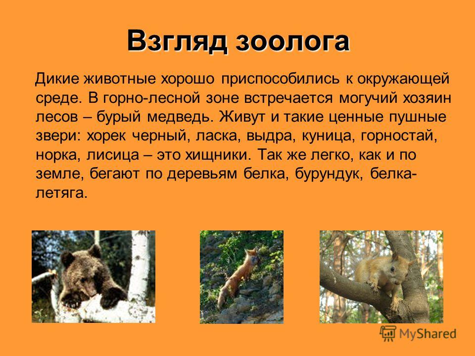 Взгляд зоолога Дикие животные хорошо приспособились к окружающей среде. В горно-лесной зоне встречается могучий хозяин лесов – бурый медведь. Живут и такие ценные пушные звери: хорек черный, ласка, выдра, куница, горностай, норка, лисица – это хищник