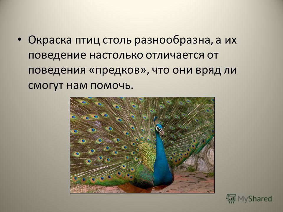 Окраска птиц столь разнообразна, а их поведение настолько отличается от поведения «предков», что они вряд ли смогут нам помочь. 10