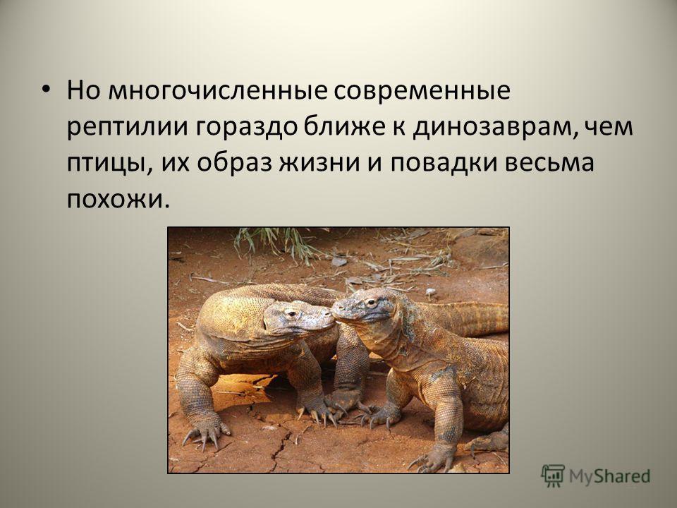 Но многочисленные современные рептилии гораздо ближе к динозаврам, чем птицы, их образ жизни и повадки весьма похожи. 11