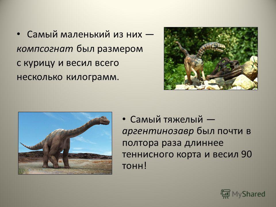 Самый маленький из них компсогнат был размером с курицу и весил всего несколько килограмм. Самый тяжелый аргентинозавр был почти в полтора раза длиннее теннисного корта и весил 90 тонн! 3