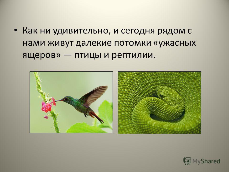 Как ни удивительно, и сегодня рядом с нами живут далекие потомки «ужасных ящеров» птицы и рептилии. 9