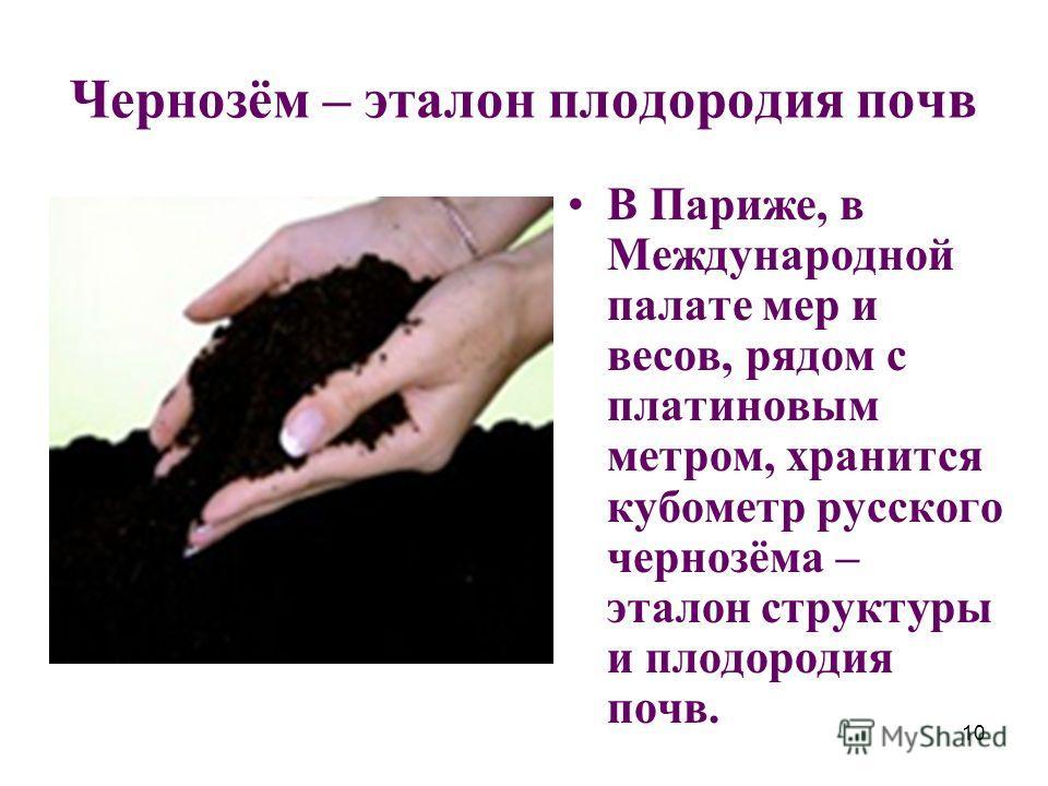 10 Чернозём – эталон плодородия почв В Париже, в Международной палате мер и весов, рядом с платиновым метром, хранится кубометр русского чернозёма – эталон структуры и плодородия почв.