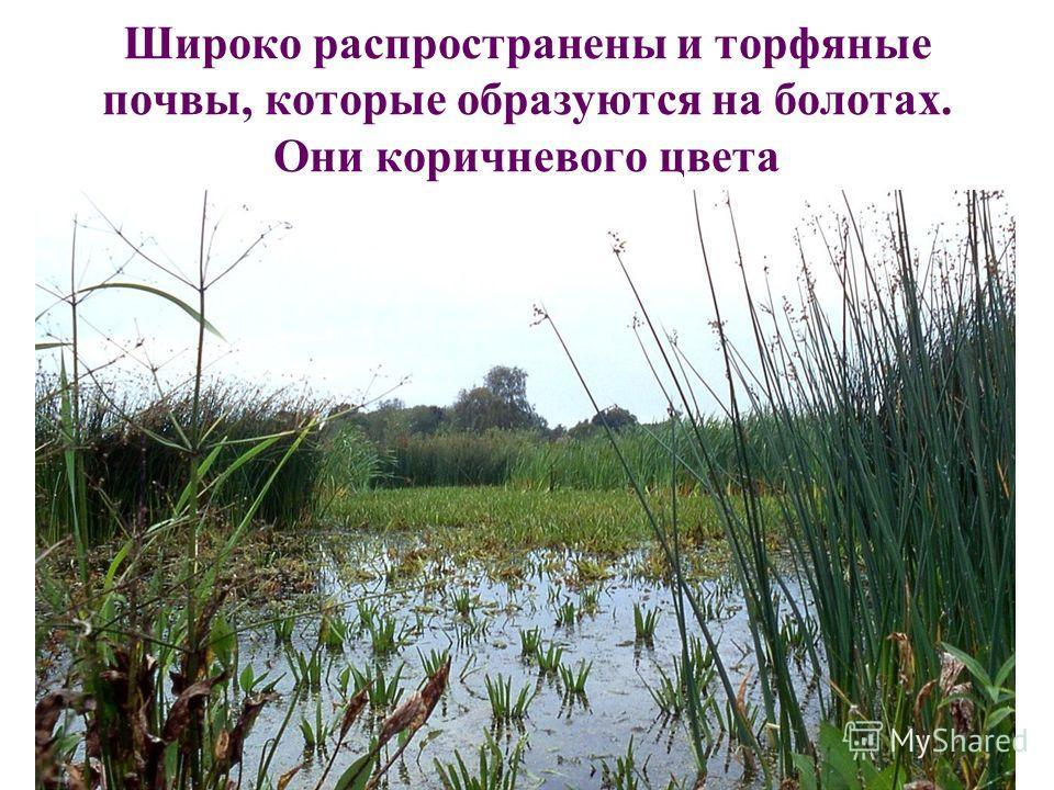 11 Широко распространены и торфяные почвы, которые образуются на болотах. Они коричневого цвета