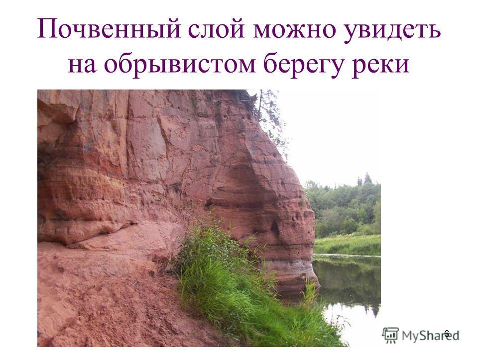 6 Почвенный слой можно увидеть на обрывистом берегу реки