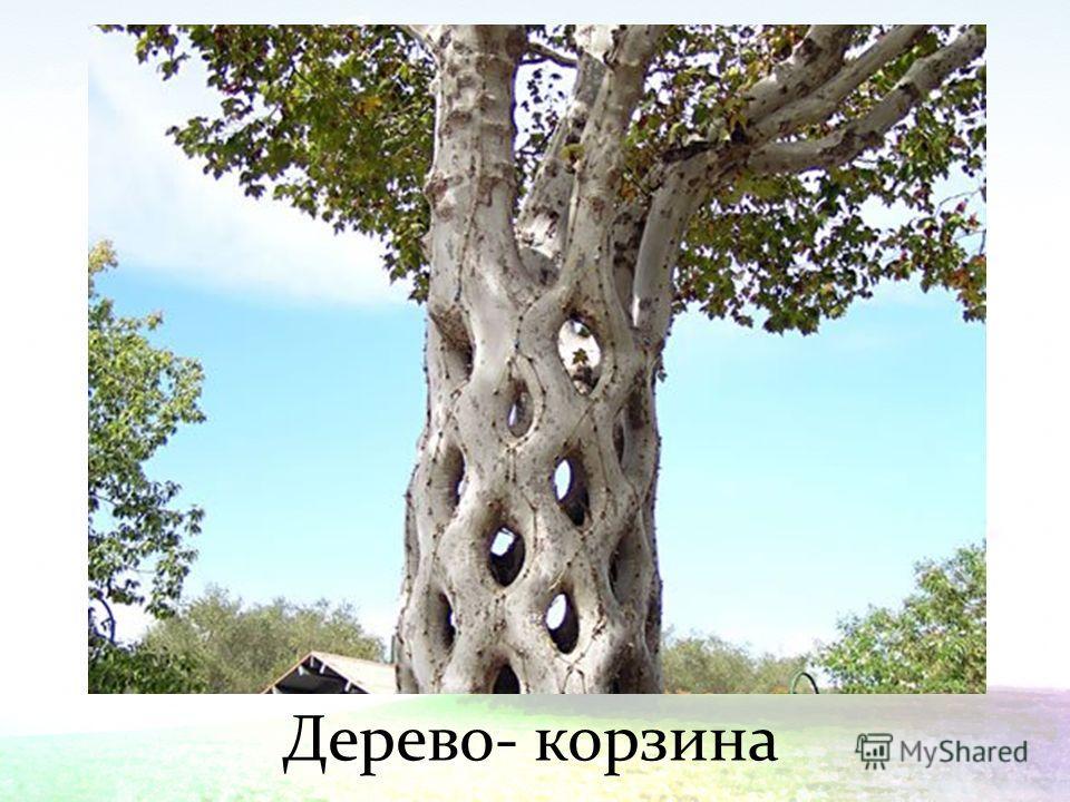 Дерево- корзина