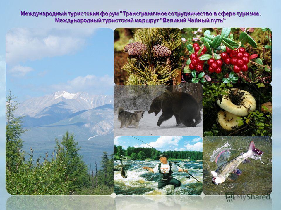 4 Международный туристский форум Трансграничное сотрудничество в сфере туризма. Международный туристский маршрут Великий Чайный путь