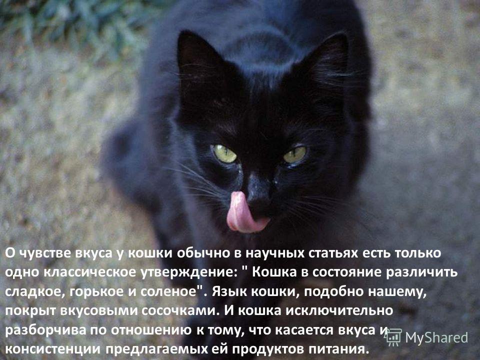 О чувстве вкуса у кошки обычно в научных статьях есть только одно классическое утверждение: