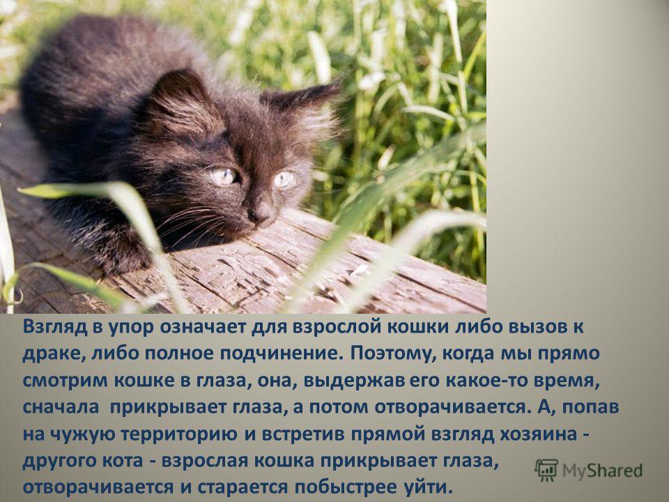 Взгляд в упор означает для взрослой кошки либо вызов к драке, либо полное подчинение. Поэтому, когда мы прямо смотрим кошке в глаза, она, выдержав его какое-то время, сначала прикрывает глаза, а потом отворачивается. А, попав на чужую территорию и вс