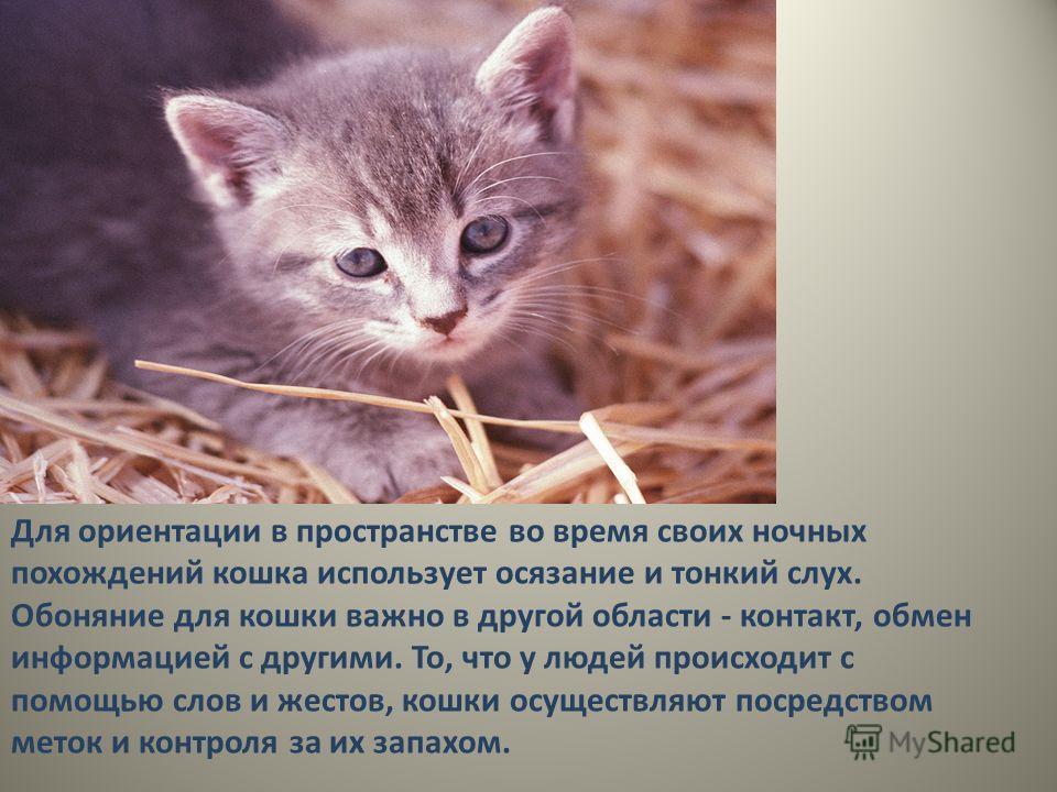 Для ориентации в пространстве во время своих ночных похождений кошка использует осязание и тонкий слух. Обоняние для кошки важно в другой области - контакт, обмен информацией с другими. То, что у людей происходит с помощью слов и жестов, кошки осущес