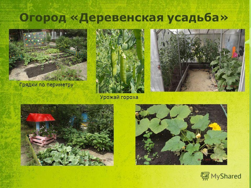 Огород «Деревенская усадьба» Грядки по периметру Урожай гороха