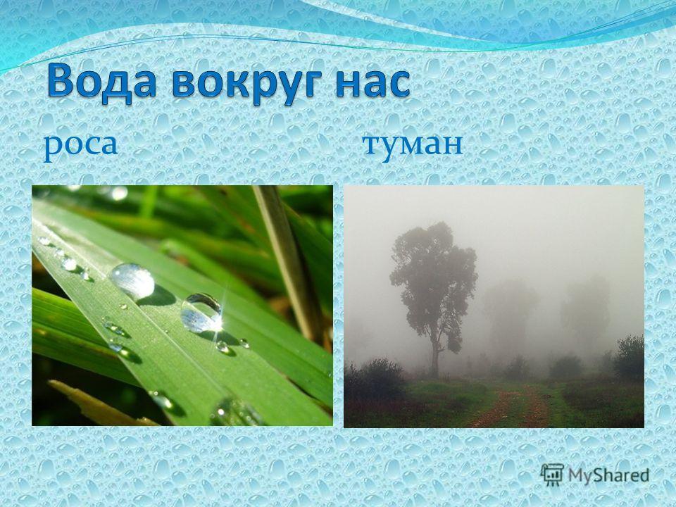 роса туман
