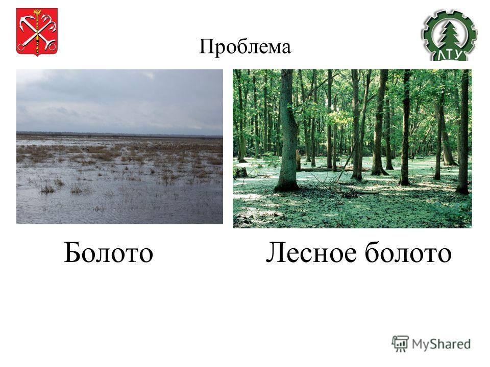 Проблема Бо Болото Лесное болото