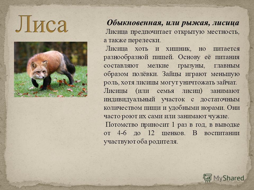 Обыкновенная, или рыжая, лисица Лисица предпочитает открытую местность, а также перелески. Лисица хоть и хищник, но питается разнообразной пищей. Основу её питания составляют мелкие грызуны, главным образом полёвки. Зайцы играют меньшую роль, хотя ли