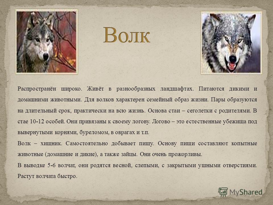 Распространён широко. Живёт в разнообразных ландшафтах. Питаются дикими и домашними животными. Для волков характерен семейный образ жизни. Пары образуются на длительный срок, практически на всю жизнь. Основа стаи – сеголетки с родителями. В стае 10-1