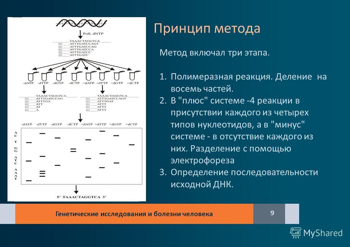 Генетические исследования и болезни человека 9 Принцип метода Метод включал три этапа. 1.Полимеразная реакция. Деление на восемь частей. 2.В