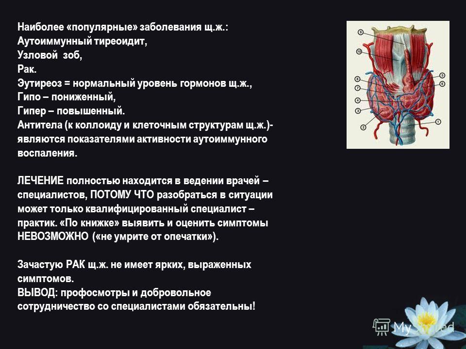 Наиболее «популярные» заболевания щ.ж.: Аутоиммунный тиреоидит, Узловой зоб, Рак. Эутиреоз = нормальный уровень гормонов щ.ж., Гипо – пониженный, Гипер – повышенный. Антитела (к коллоиду и клеточным структурам щ.ж.)- являются показателями активности