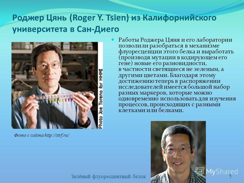 Роджер Цянь (Roger Y. Tsien) из Калифорнийского университета в Сан-Диего Работы Роджера Цяня и его лаборатории позволили разобраться в механизме флуоресценции этого белка и выработать (производя мутации в кодирующем его гене) новые его разновидности,