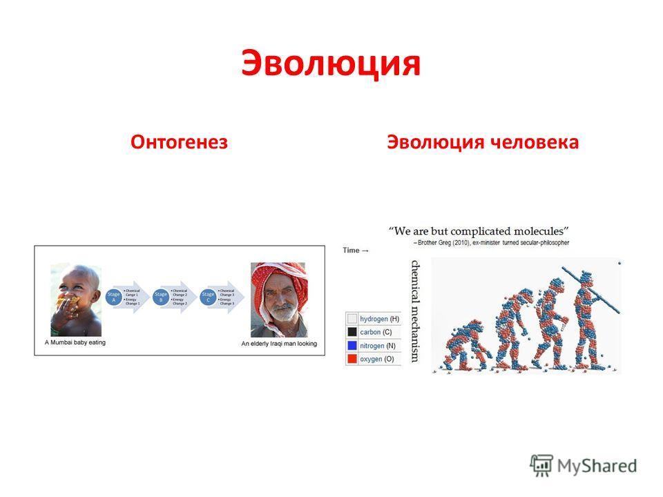 Эволюция ОнтогенезЭволюция человека