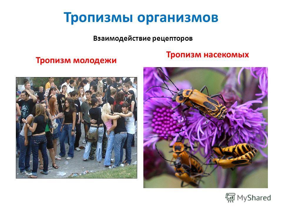 Тропизмы организмов Взаимодействие рецепторов Тропизм молодежи Тропизм насекомых