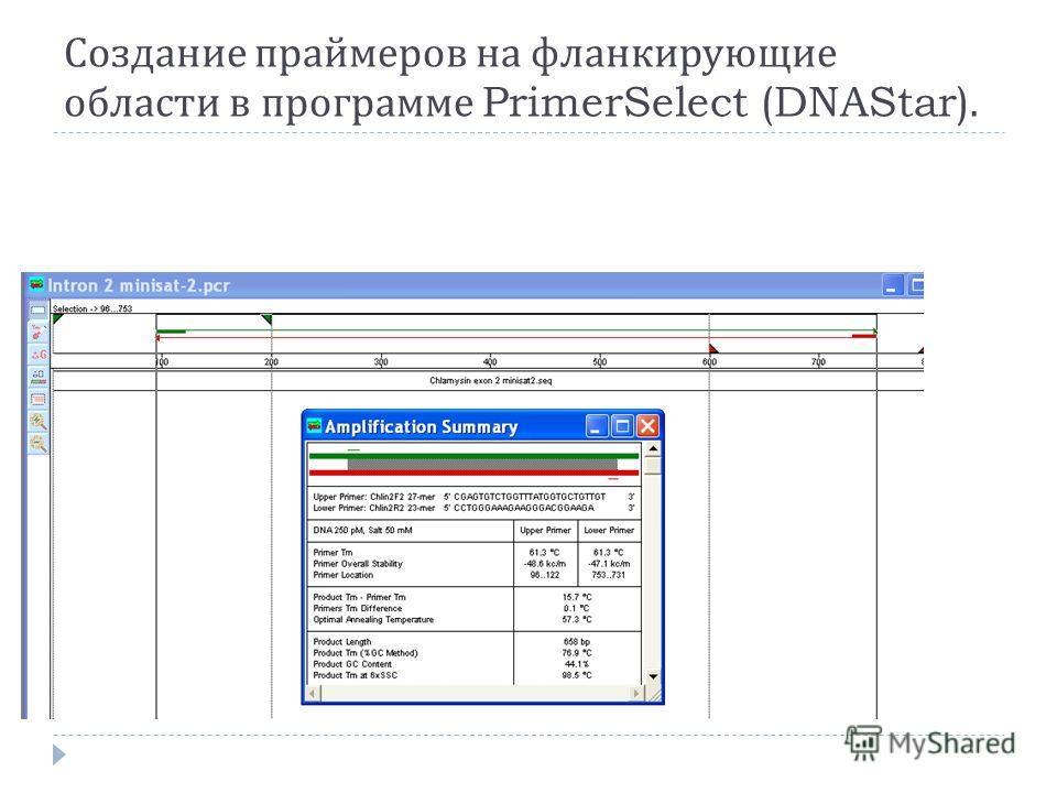 Создание праймеров на фланкирующие области в программе PrimerSelect (DNAStar).