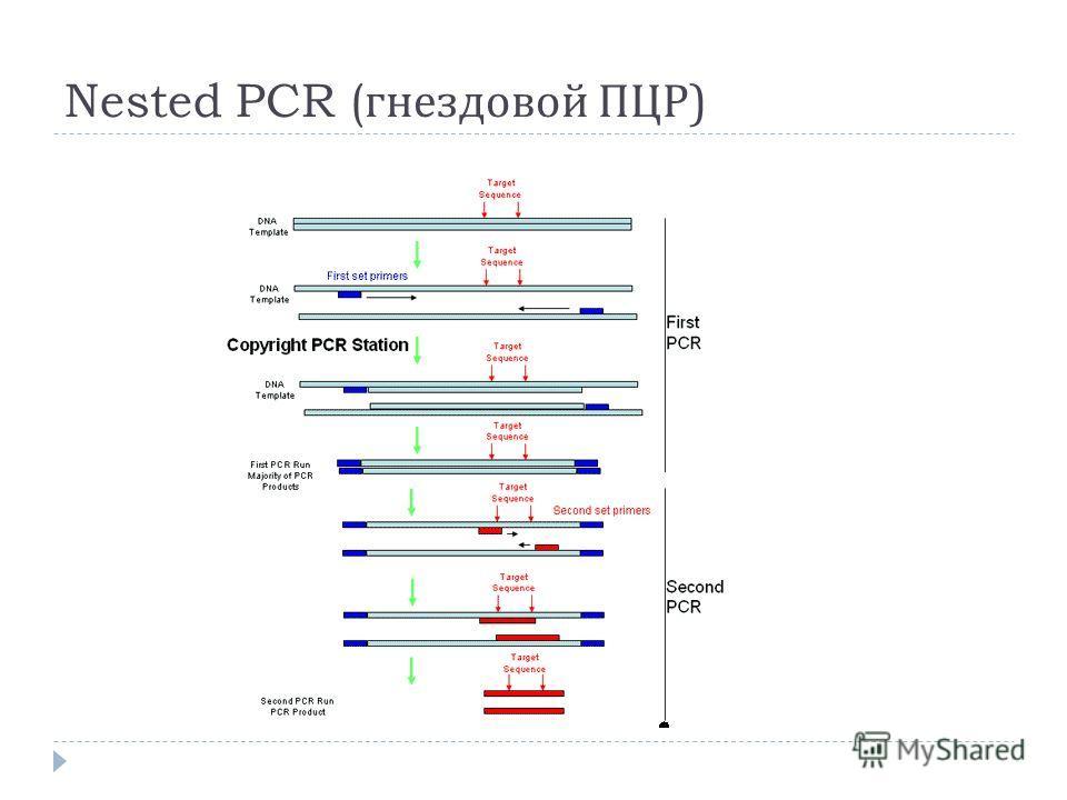 Nested PCR ( гнездовой ПЦР )