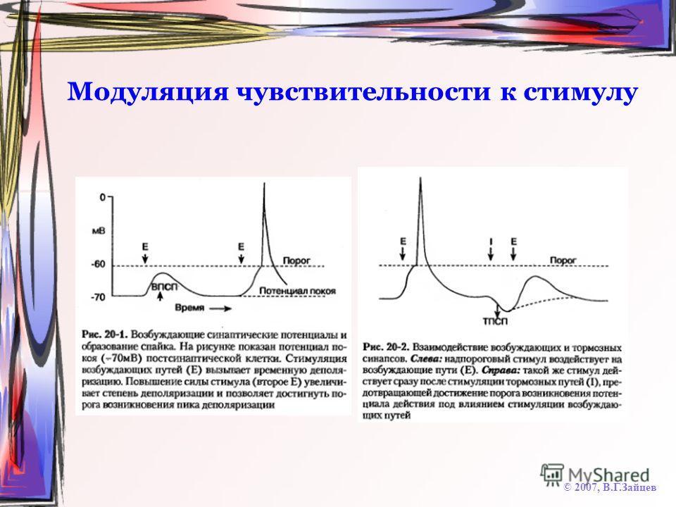 Модуляция чувствительности к стимулу © 2007, В.Г.Зайцев