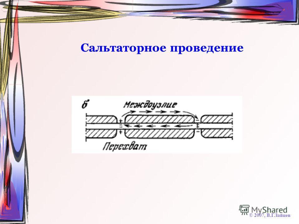 Сальтаторное проведение © 2007, В.Г.Зайцев