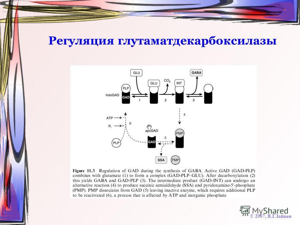 Регуляция глутаматдекарбоксилазы © 2007, В.Г.Зайцев