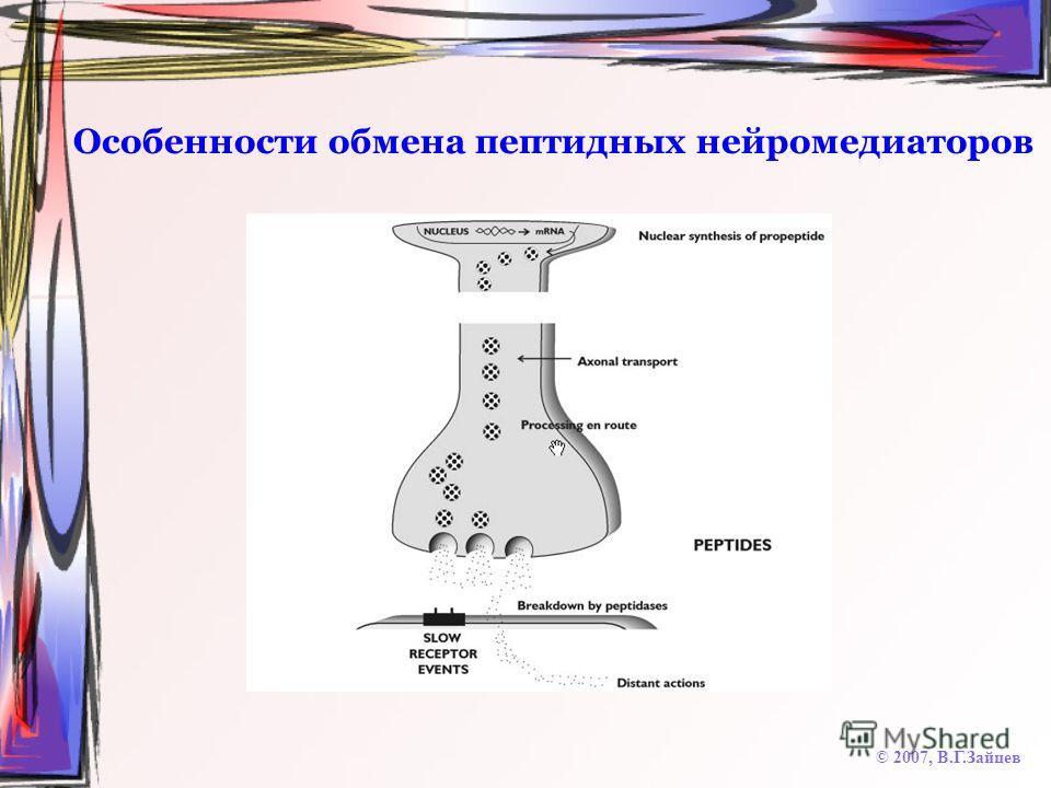 Особенности обмена пептидных нейромедиаторов © 2007, В.Г.Зайцев