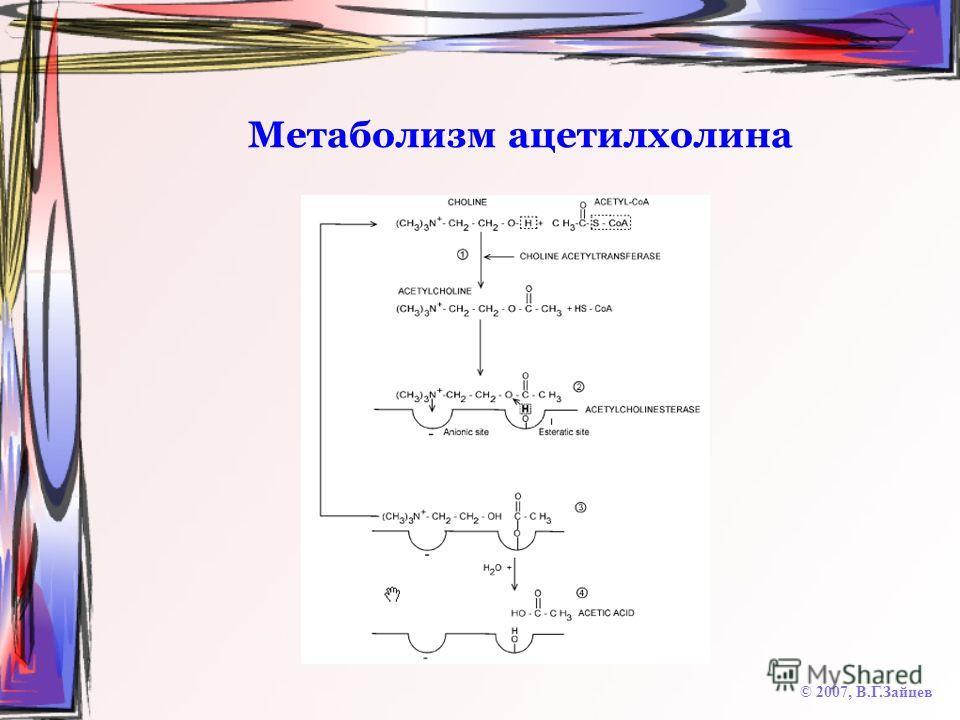 Метаболизм ацетилхолина © 2007, В.Г.Зайцев