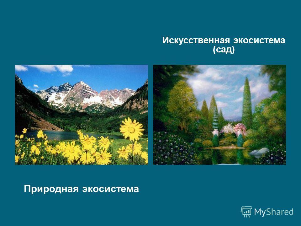Природная экосистема Искусственная экосистема (сад)
