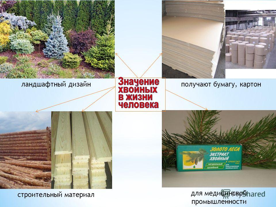 для медицинской промышленности строительный материал получают бумагу, картонландшафтный дизайн