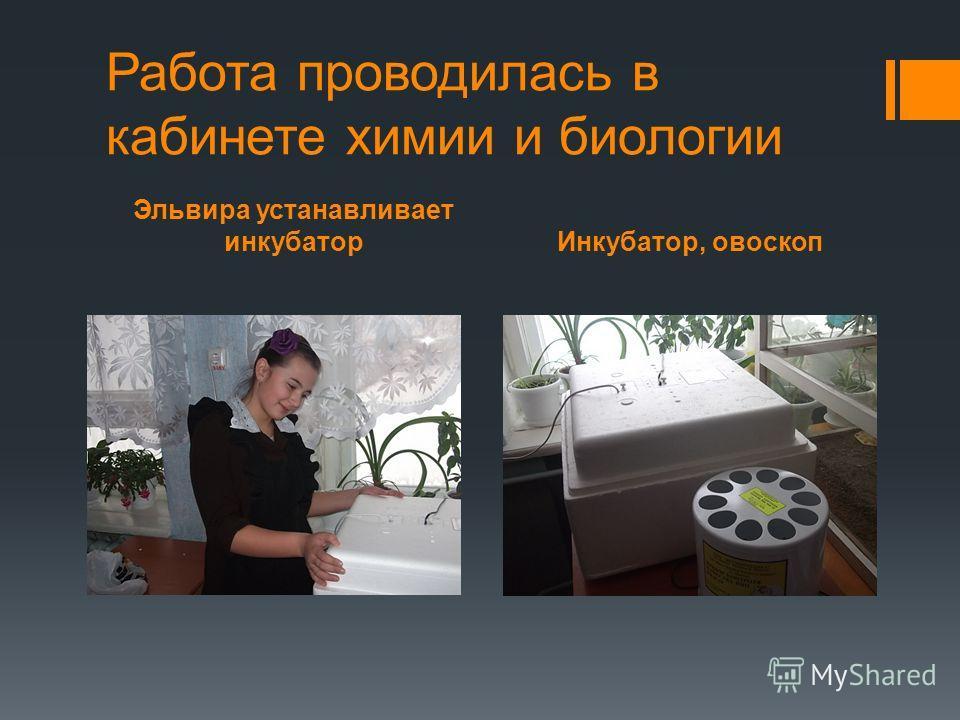 Эльвира устанавливает инкубаторИнкубатор, овоскоп Работа проводилась в кабинете химии и биологии