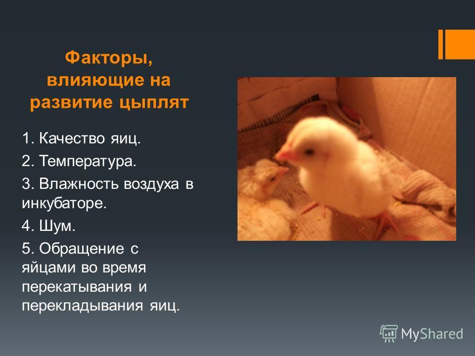 Факторы, влияющие на развитие цыплят 1. Качество яиц. 2. Температура. 3. Влажность воздуха в инкубаторе. 4. Шум. 5. Обращение с яйцами во время перекатывания и перекладывания яиц.