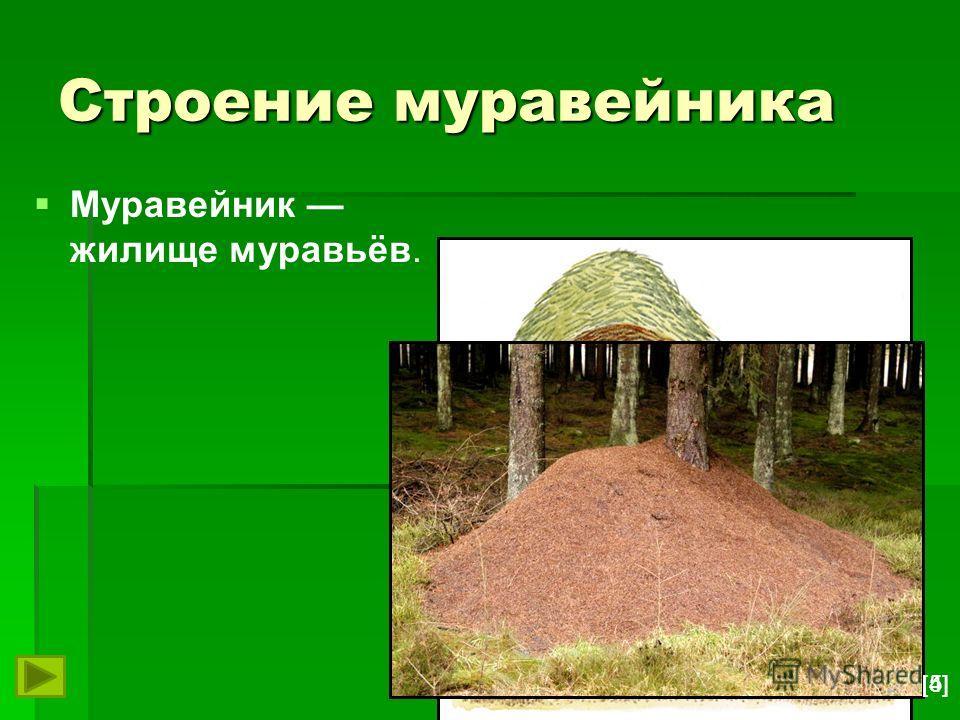 Строение муравейника Муравейник жилище муравьёв. [5][5][4][4]