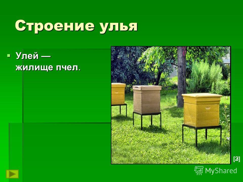 Строение улья Улей жилище пчел. Улей жилище пчел. [3][2]