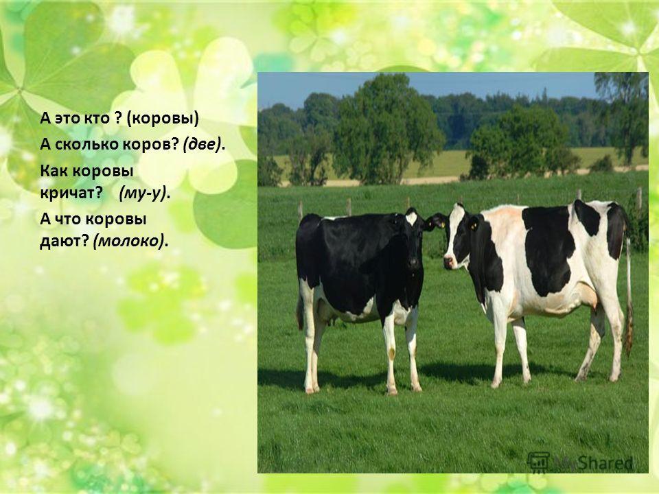 А это кто ? (коровы) А сколько коров? (две). Как коровы кричат? (му-у). А что коровы дают? (молоко).