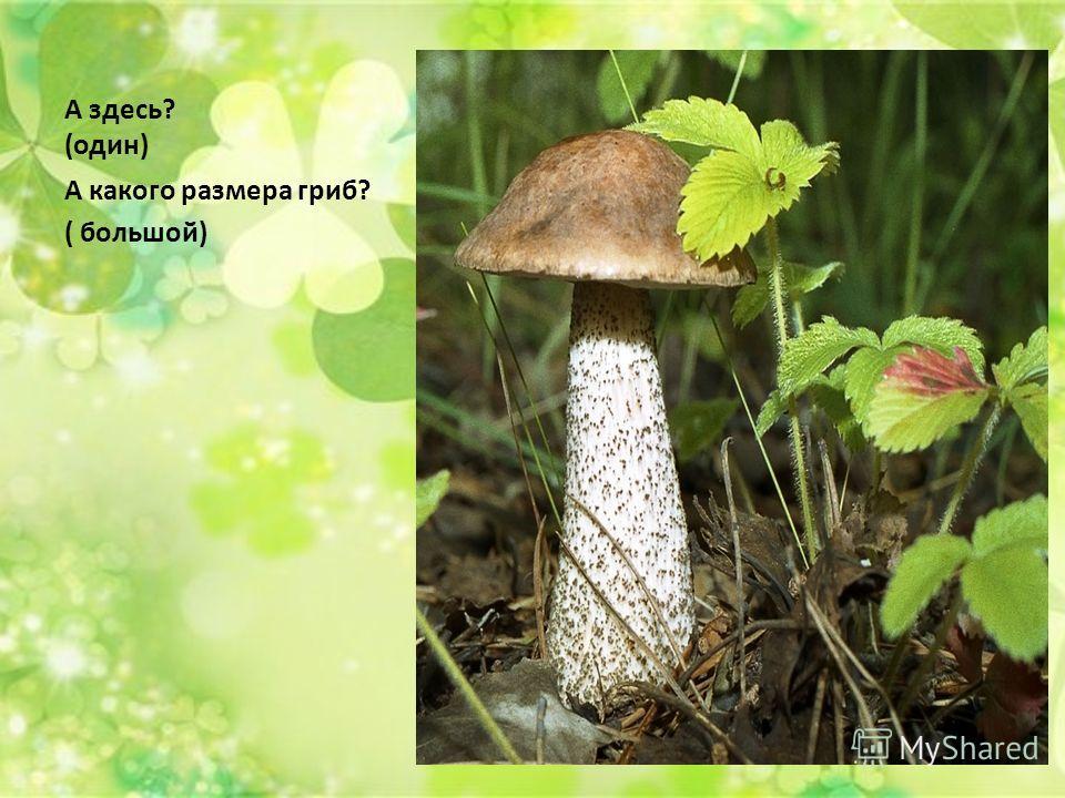 А здесь? (один) А какого размера гриб? ( большой)