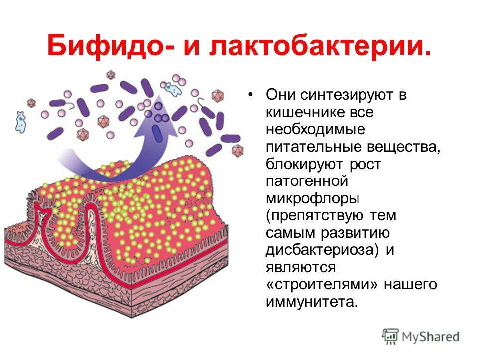 Бифидо- и лактобактерии. Они синтезируют в кишечнике все необходимые питательные вещества, блокируют рост патогенной микрофлоры (препятствую тем самым развитию дисбактериоза) и являются «строителями» нашего иммунитета.