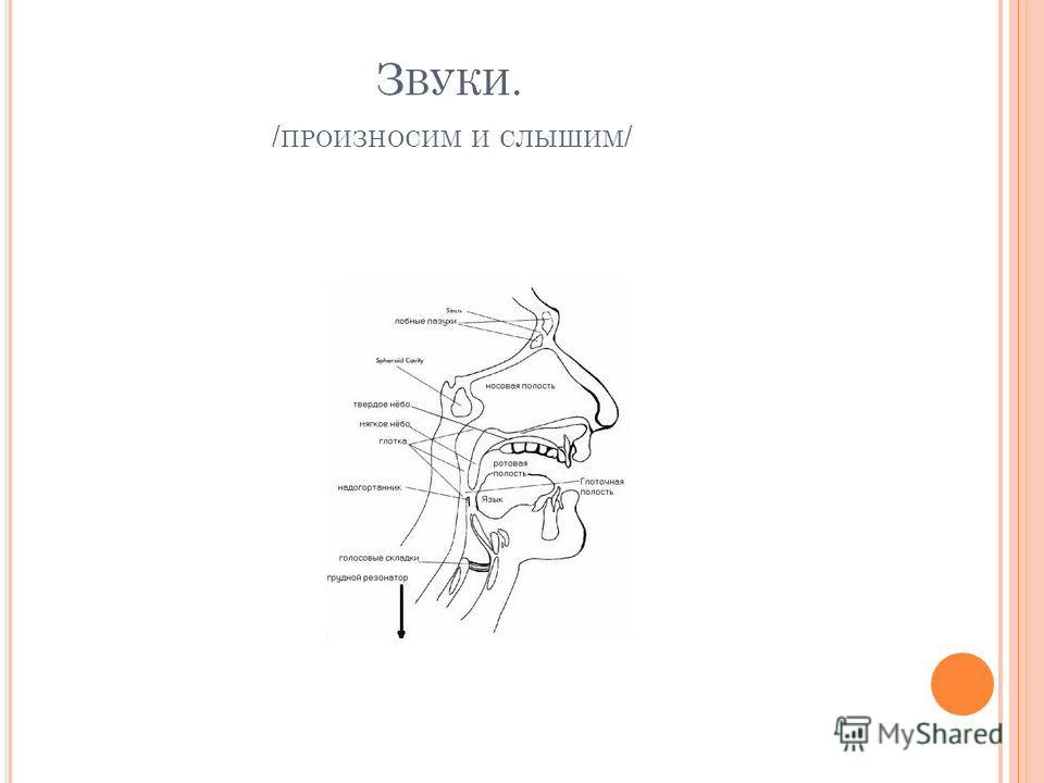 З ВУКИ. / ПРОИЗНОСИМ И СЛЫШИМ /