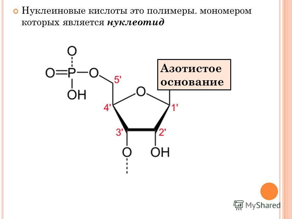Нуклеиновые кислоты это полимеры. мономером которых является нуклеотид Азотистое основание